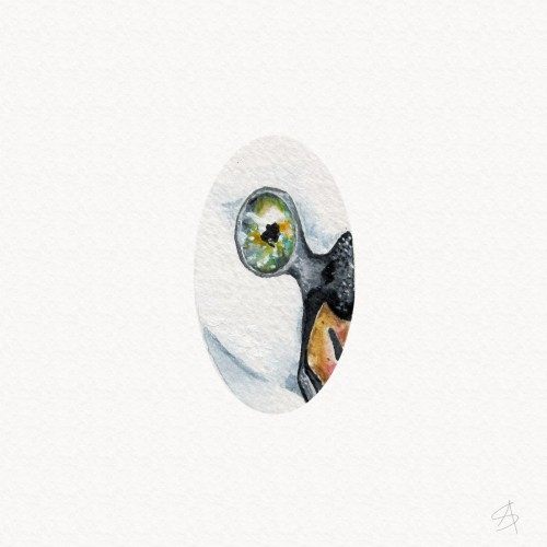 … a swan with human eyes …